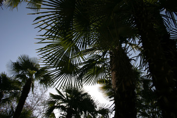 contre-jour palmiers