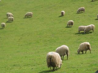Poster de jardin Sheep moutons basques
