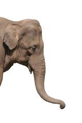 an elephant head isolated