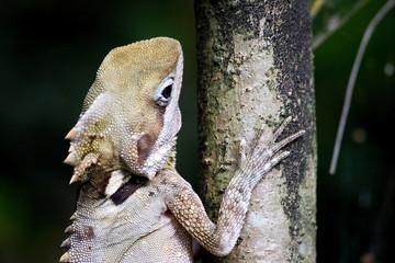 gros plan sur dragon des forêts