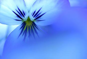soort van blauw