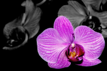 selective orchid