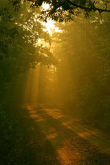 Fotobehang Bamboo sunbeams on a county road