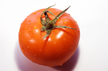 single red, ripe tomato covered in water droplets