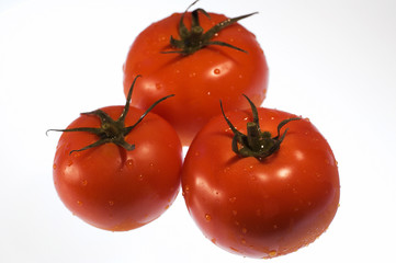 red, ripe tomatoes with water droplets