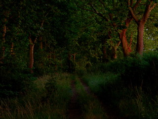 chemin arboré au crépuscule