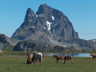 chevaux devant le lac d'anayet, pyrénées