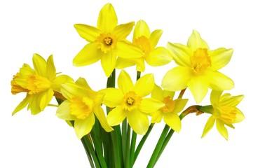 Foto op Canvas Narcis daffodils