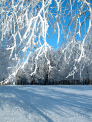 Fotobehang Bergen winter hoar-frost.