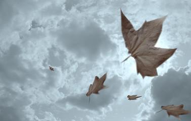 feuilles mortes 1