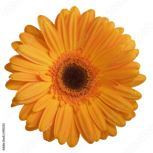 Fleur Gerbera Stock Photo And Royalty Free Images On Fotolia Com