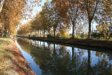 alignement et reflet d'arbres