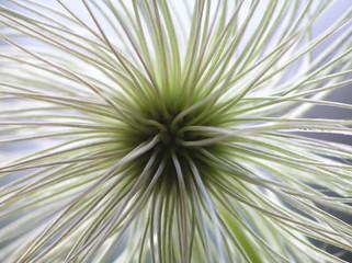 Fotorolgordijn Paardebloemen en water seed from clematis