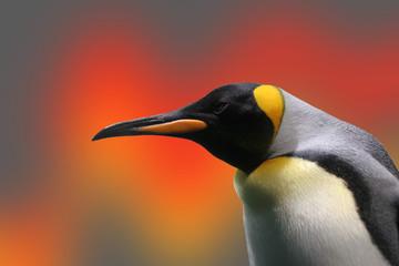 Foto auf Acrylglas Pinguin penguin