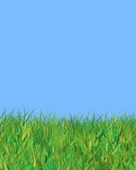 blue sky and grass illustration