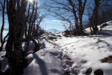 contre-jour sur neige