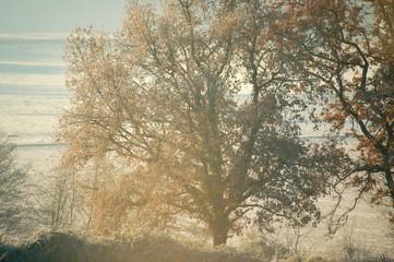 arbre dans la brume