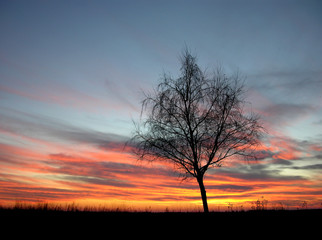 silhouette of a lonely tree in the sunset