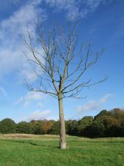 arbre sans feuilles - Arbre Sans Feuille