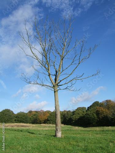 Arbre sans feuilles photo libre de droits sur la banque - Arbres sans feuilles ...