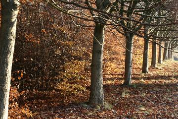 danish landscape01
