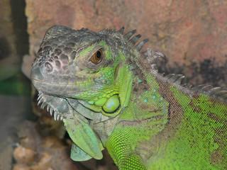 smile of lizard