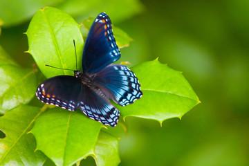 butterfly9562.jpg