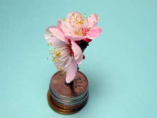 blossoming money