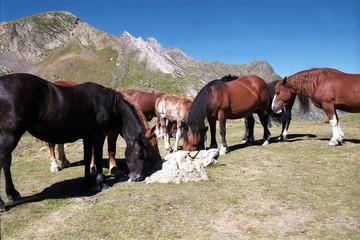 chevaux du col