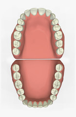 3d dental chart