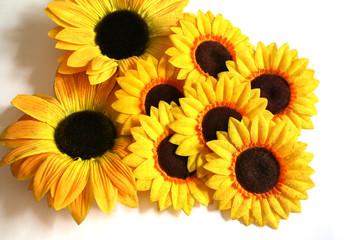 sunflower exhibit