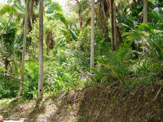 jungle mexique