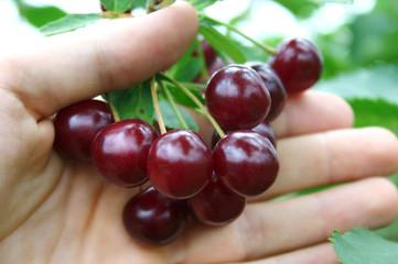 cherry on a palm