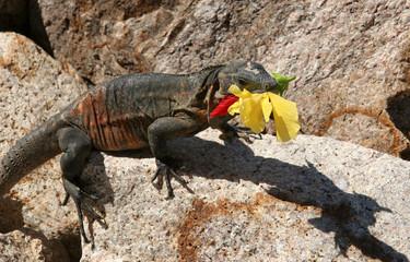 iguana with a flower