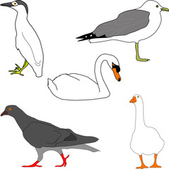 bird collection (illustration)