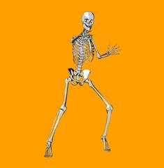 bone 68