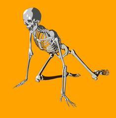 bone 99