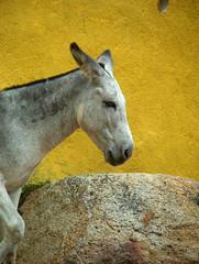 mex_donkey