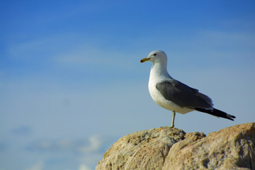 lone seagull against blue sky