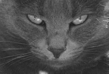 monochrome cat eyes