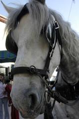caballos-14