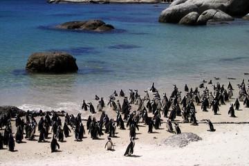 pinguine am strand von südafrika