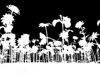 Photo sur cadre textile Floral noir et blanc the colors of spring