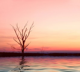 pink sunrise with lonely tree