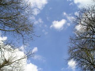 Fotobehang Aan het plafond sky through trees