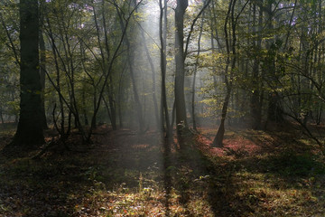 forêt saint germain
