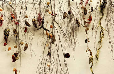 switzerland, zurich: dried branches on a wall