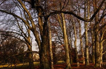 switzerland, zurich: trees near the lake