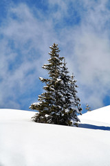 sapin neige