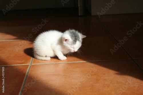 train kitten to use toilet